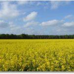Pollen, Pollen – nichts als Pollen